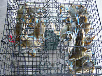 Southern Wire Company Crab Traps Amp Wire